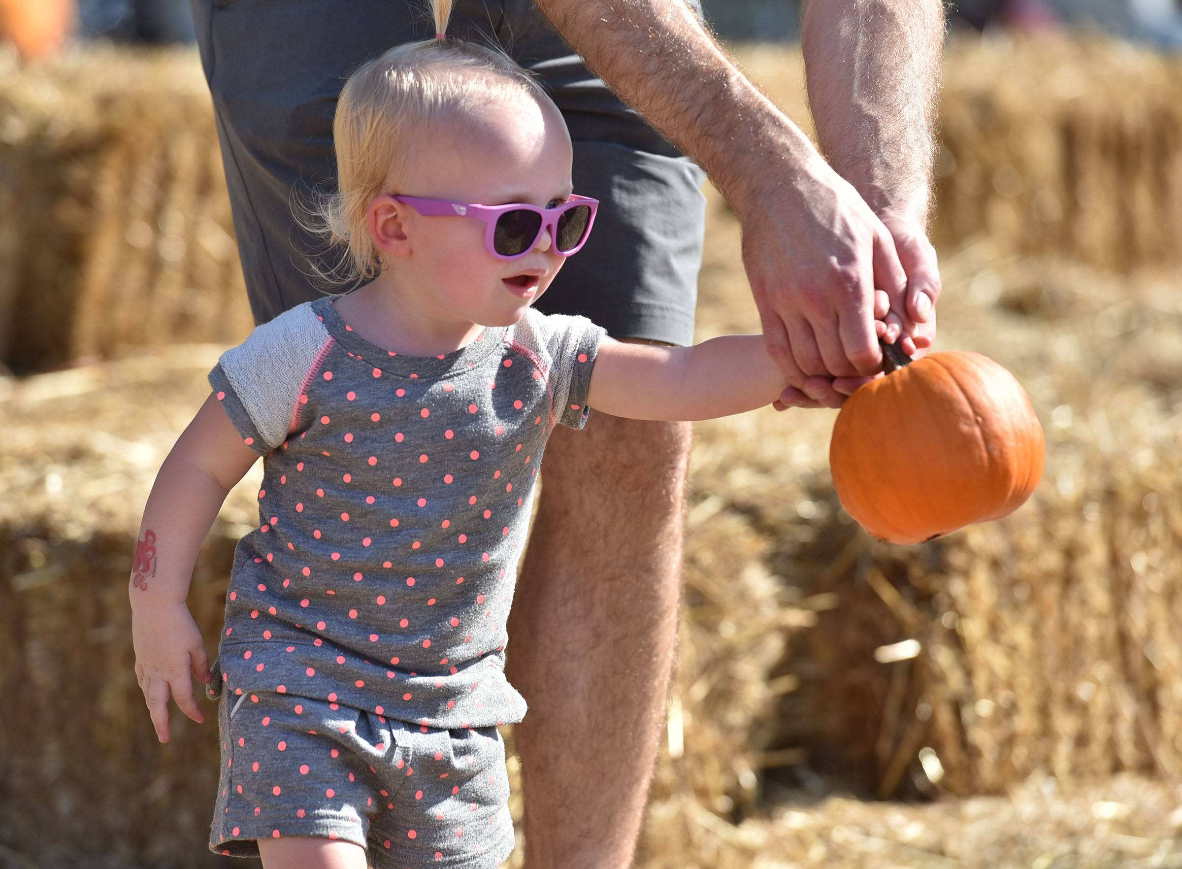 Sarah Dolder, 1, holds a small pumpkin with help from her dad Brian Dolder of Huntley Saturday at the Huntley Fall Fest at Deicke Park. They were playing a bowling game in the kids activity area.