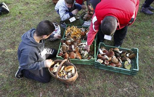 In this grab taken from video, young boys collect mushrooms at the foraging festival, some 60 kilometers (nearly 40 miles) south of the capital of Vilnius, Lithuania, Saturday, Sept. 23, 2017. Thousands of Lithuanians have been running around with baskets and buckets in a pine forest in southeastern Lithuania for the national championship of wild mushroom picking. (Mindaugas Kulbis via AP)
