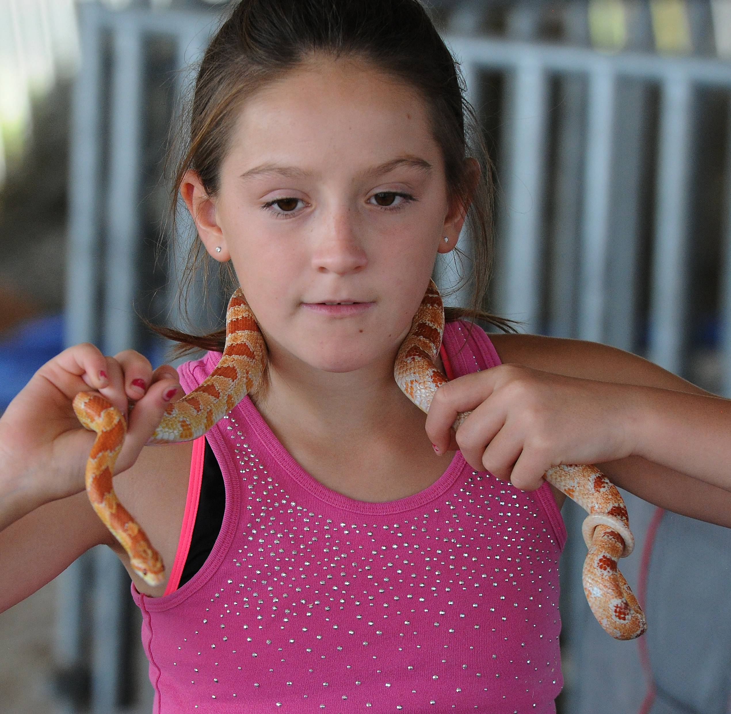 Savanna Lehman, 10, of Grayslake gets close with her friendly corn snake at the Farm Heritage and Harvest Festival at the Lake County Fairgrounds on Sunday.