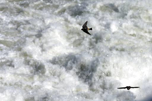 FILE - This March 27, 2014 file photo shows birds flying over water diverted into agricultural canals at the Morelos Dam in Los Algodones, Mexico. The U.S. and Mexico have agreed to expand a far-reaching conservation agreement that governs how they manage the overused Colorado River, which supplies water to millions of people and farms in both nations. Officials of U.S. water districts say the agreement to be signed Wednesday, Sept. 27, 2017 calls for the United States to invest $31.5 million to improve Mexico's water infrastructure, with the resulting water savings to be shared by users in both nations and by environmental projects.