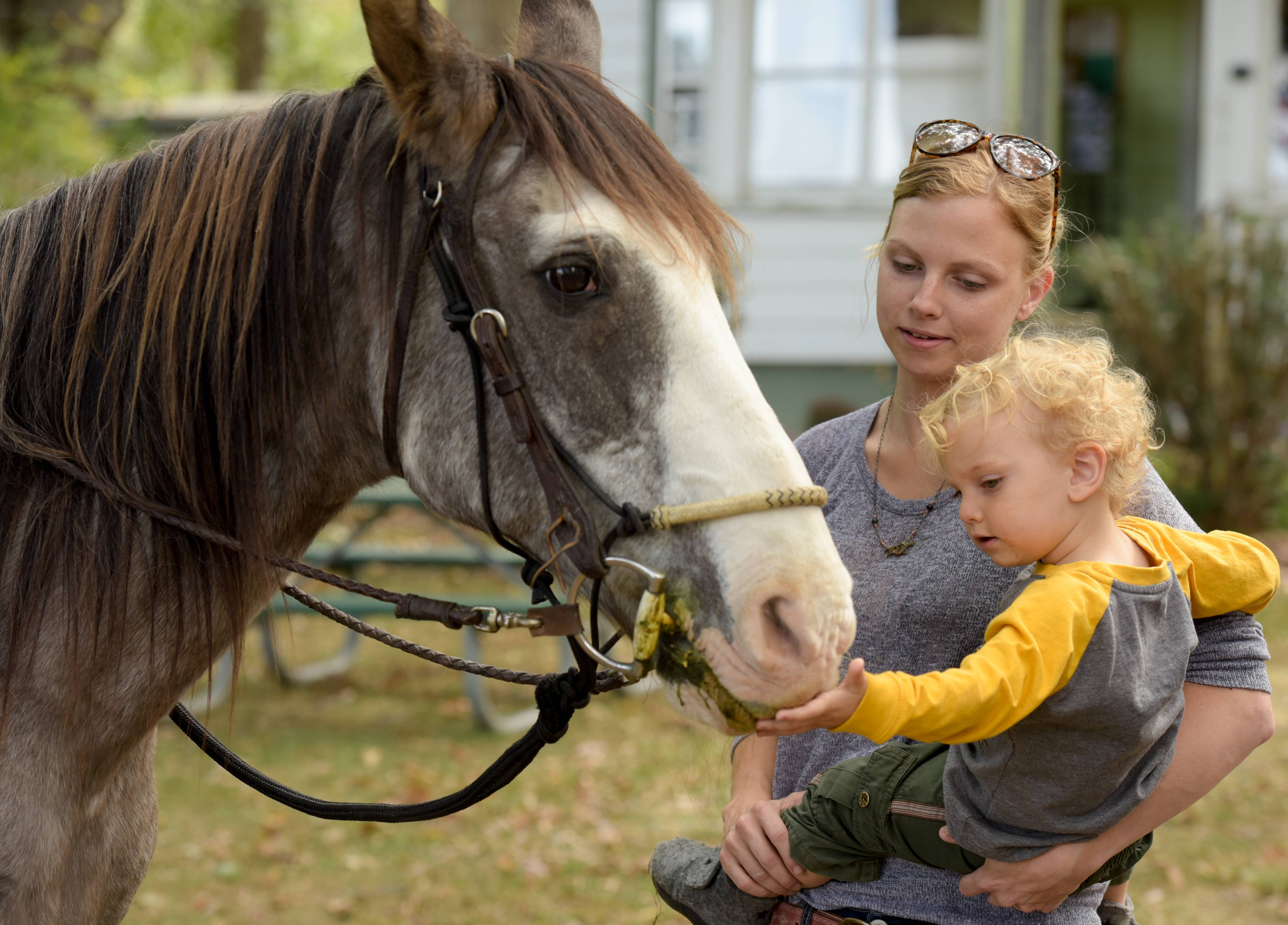Meghan Prohaska and her son Rowan, 2, of Elburn pet Cougar of the Kane County Forest Preserve Mounted Rangers during the Fox Valley Wildlife Center open house Sunday in Elburn.