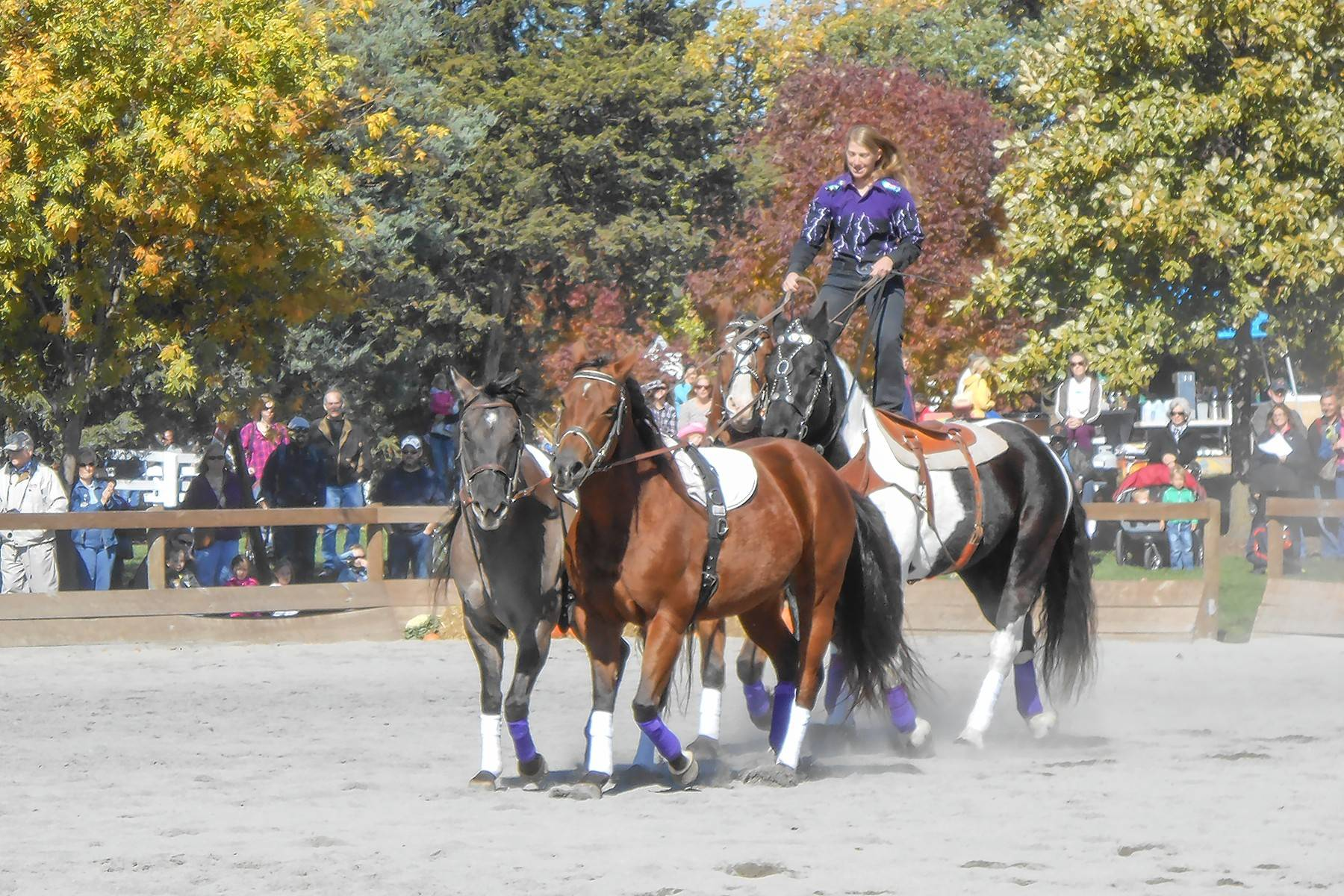 The Danada Fall Festival includes equestrian performances and a parade of horse breeds.