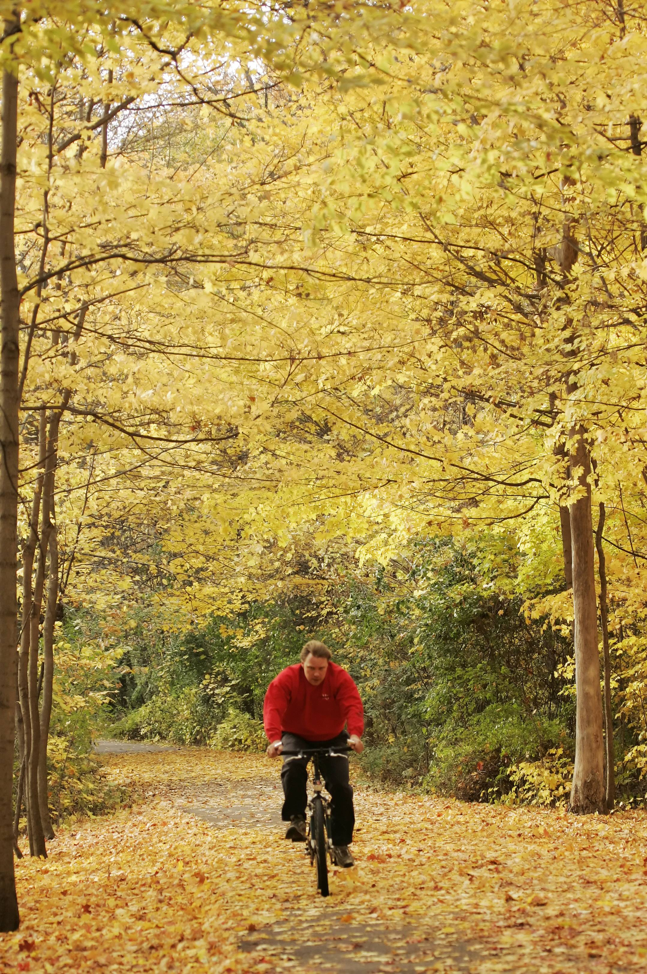 The Busse Woods bike trail is a great place for a fall ride.