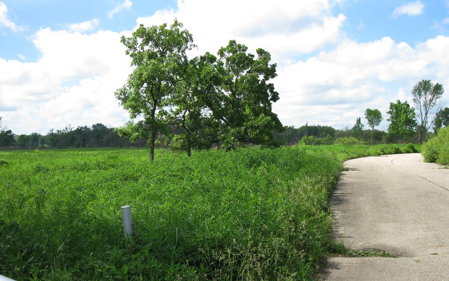 A crumbling road inside Lake County's Spring Bluff Forest Preserve will be removed and replaced by a trail for walkers, joggers and nature lovers by next summer.