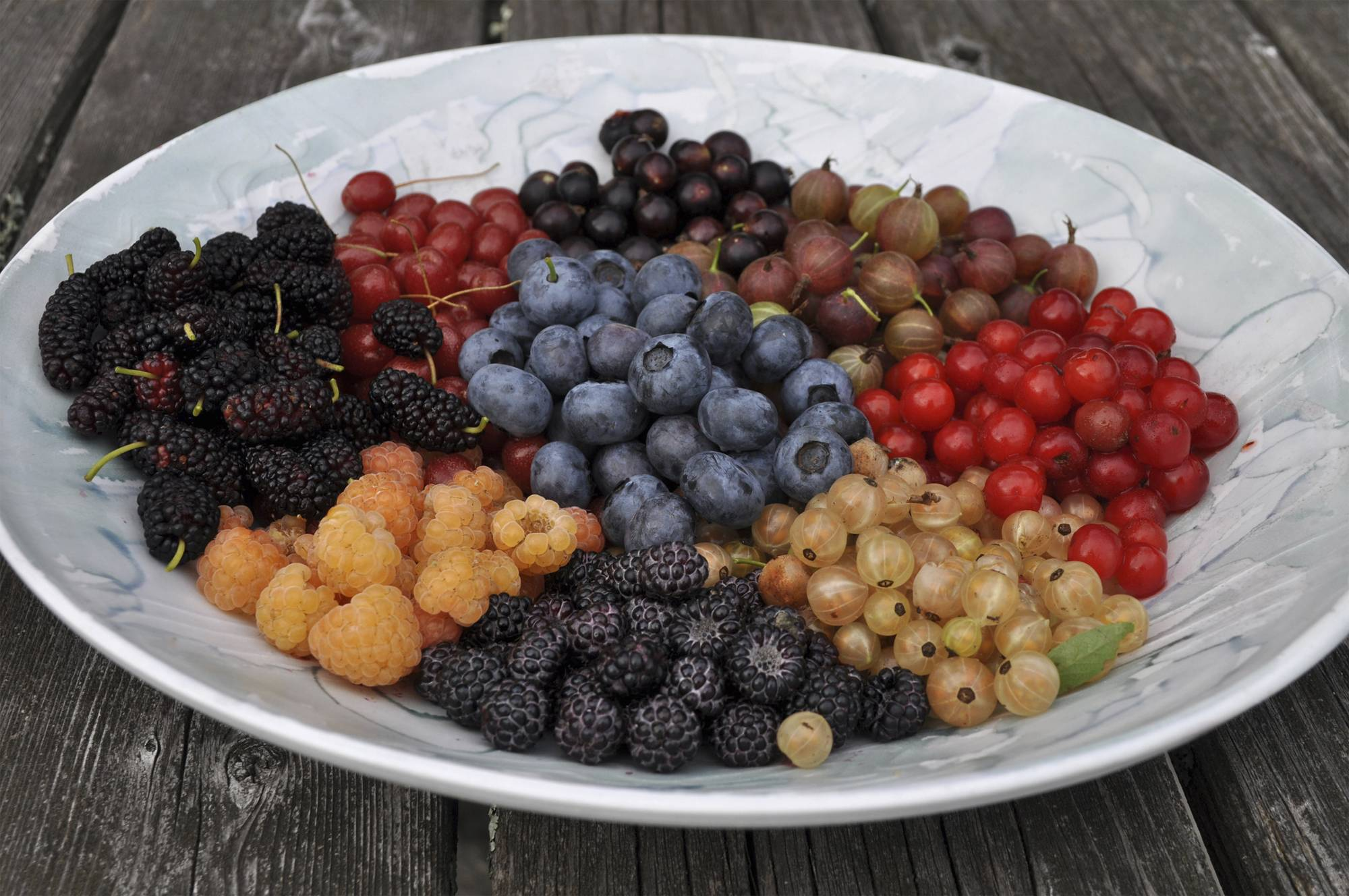 Berries are the quintessential summer fruit but, with choice of appropriate varieties, raspberries, blackberries, and blueberries can go on to yield their delectable bounty into fall.