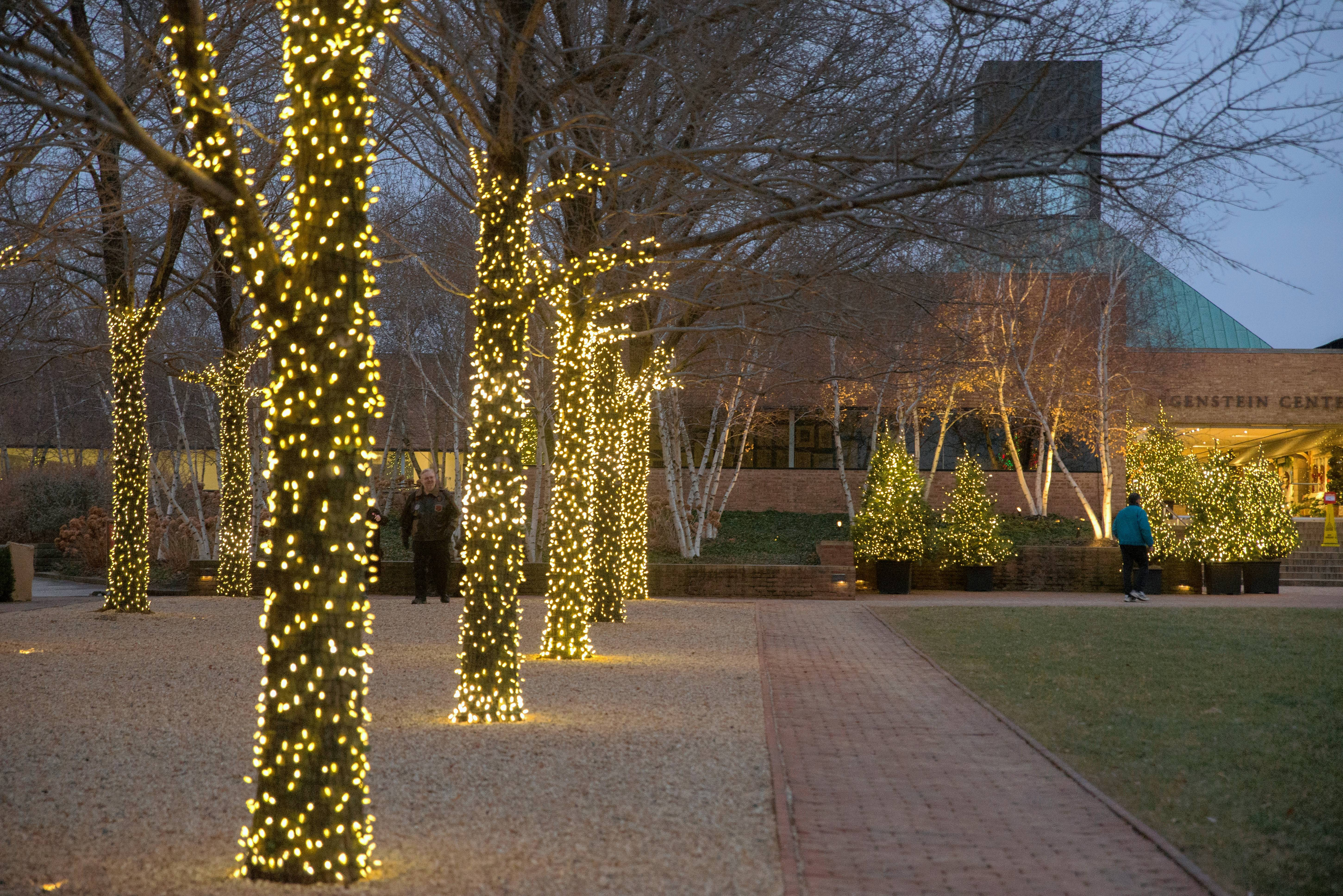 The staff at Chicago Botanic Garden starts installing strings of lights in early October.