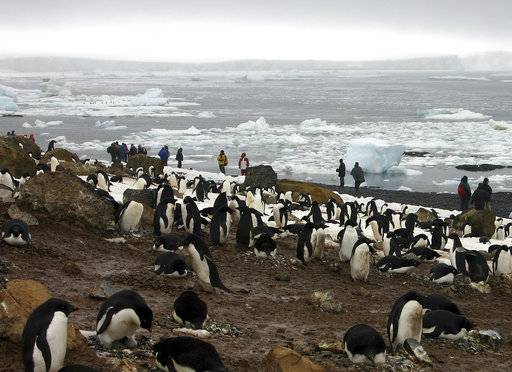 "FILE - In this file photo dated Dec. 12, 2005, tourists observe scores of Adelie penguins gathered at Brown Bluff on the northern tip of the Antarctic Peninsula. According to research released Sunday Oct. 15, 2017, by environmental group WWF, scientists say a ""catastrophic breeding failure� occurred when thousands of chicks from an Adelie penguin colony died of starvation last summer when adult penguins were forced to travel further for food, with only two chicks surviving the existential phenomena. (AP Photo/Brian Witte, FILE)"