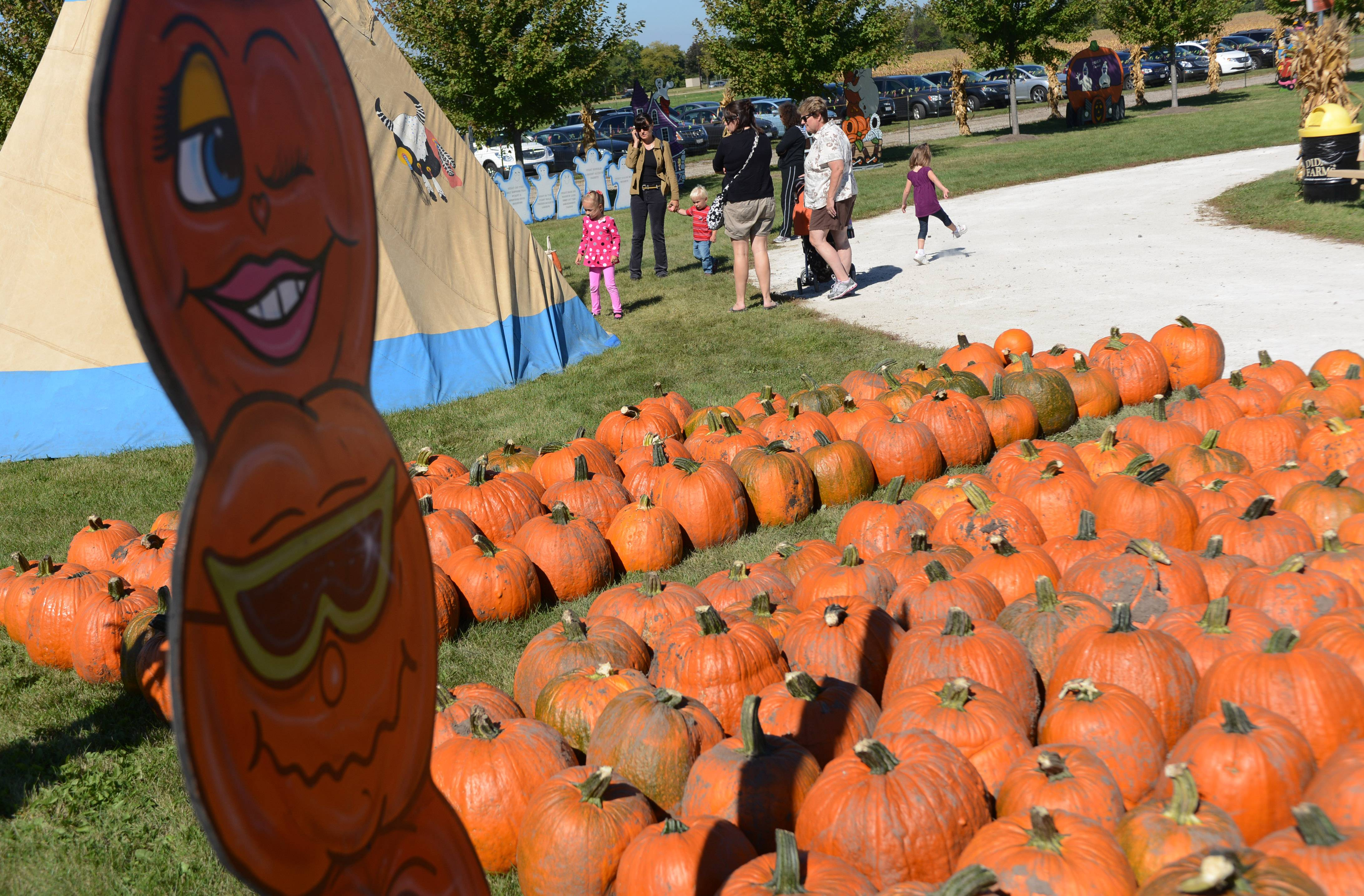 Pumpkins are ready for visitors to Didier Farms in Lincolnshire. Environmental organization SCARCE is campaigning for people to drop off pumpkins for composting after Halloween.