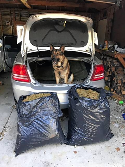A police dog stands watch over some of an estimated $500,000 in marijuana police seized in Ingleside Monday, as part of an ongoing investigation into a cartel-affiliated drug ring.