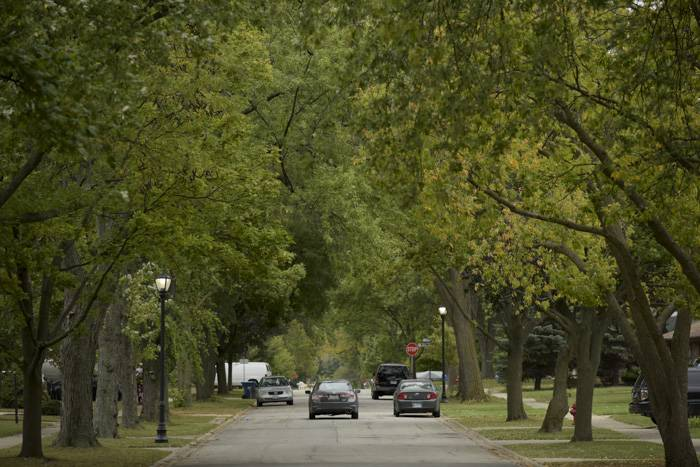 Mature trees line Barron Street in Bensenville. The village lost more than 1,200 trees to the Emerald Ash Borer beetle and is planting 60 to 70 new trees every spring and fall to replace them.