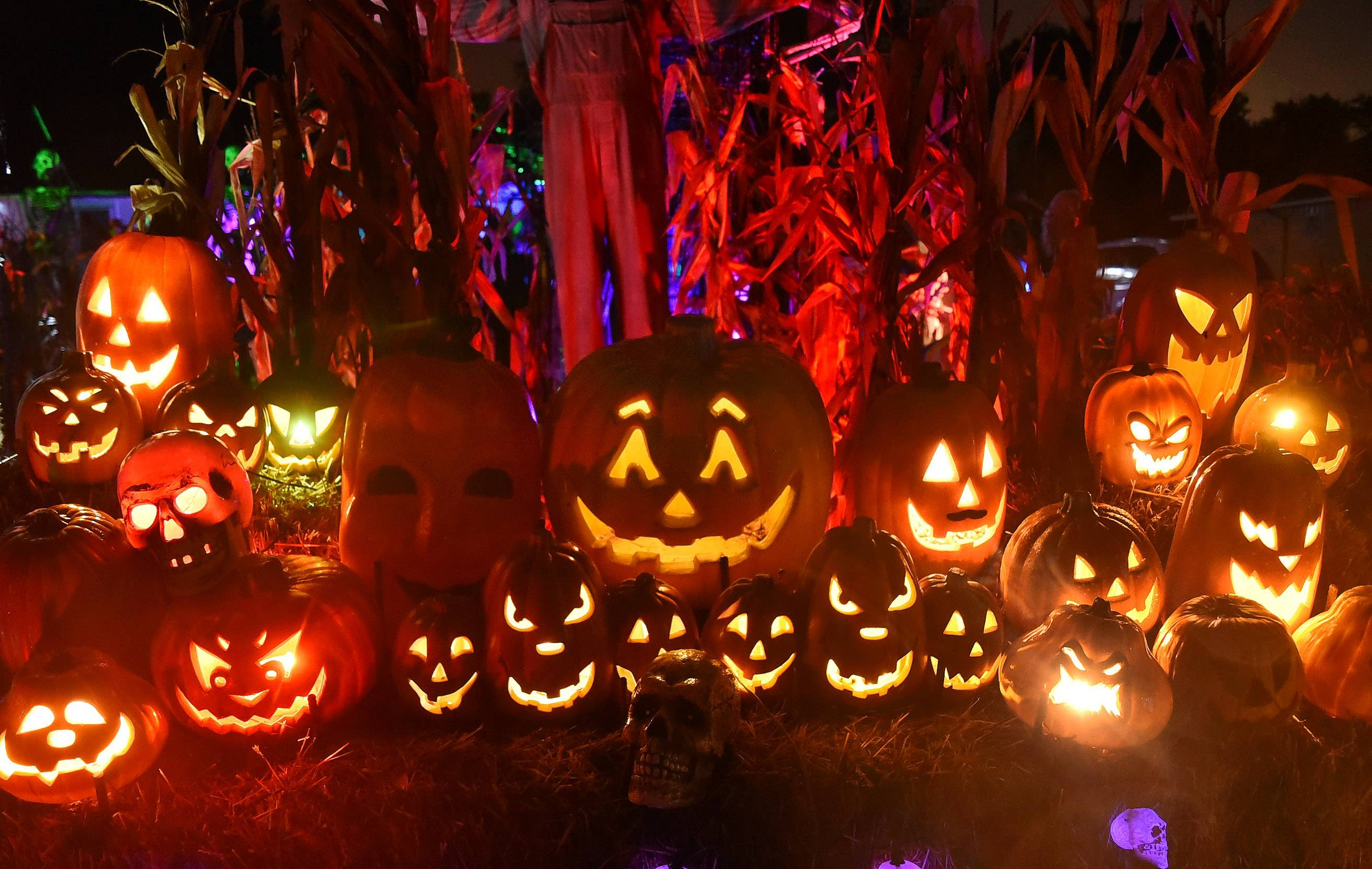 "These pumpkins don't just look pretty, they sing ""Monster Mash"" for the thousands of people who will visit the Arlington Heights home of Michael Podlin, TammySue Margalit and their kids this Halloween."
