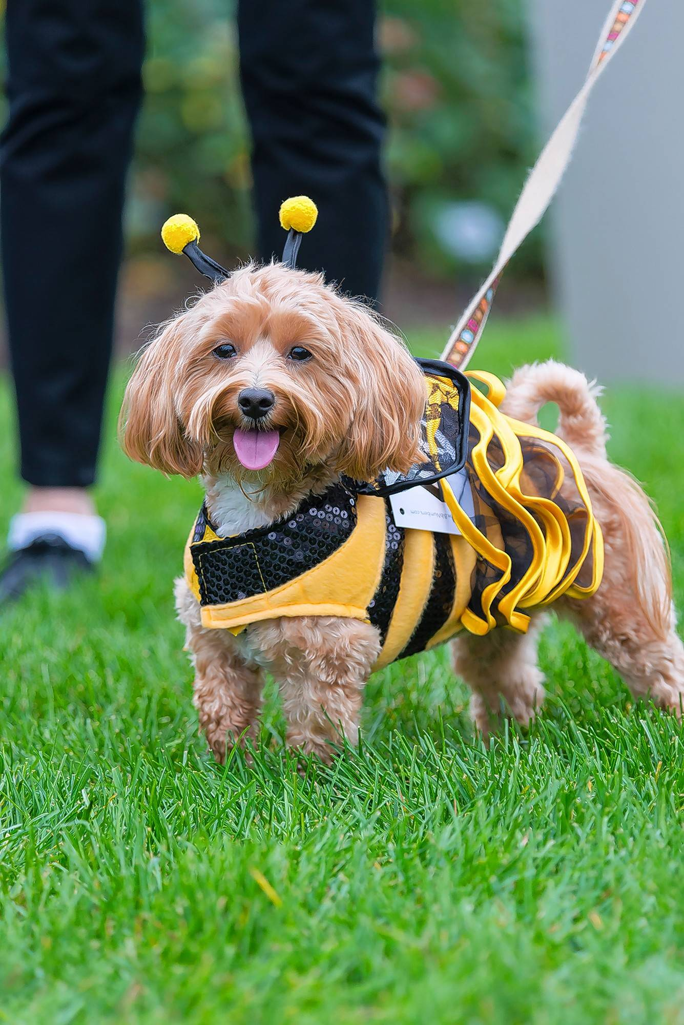Costumed canines compete for prizes Saturday at the Spooky Pooch Parade at the Chicago Botanic Garden in Glencoe.