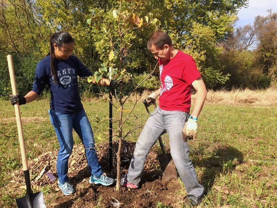 Lia Boucek and her dad, Chuck, tamp down an oak tree they planted Saturday at a volunteer work day south of Casey Road near Almond Road in Libertyville Township
