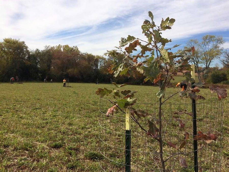About 30 volunteers planted trees Saturday as part of a restoration project in Libertyville Township