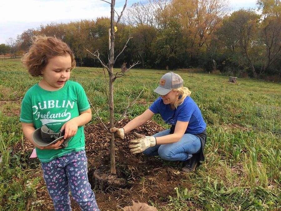 Jade Drayton, 5, and her mother, Natalie, were among the volunteers planting trees Saturday at the Donnelley Prairies and Oaks Preserve in Libertyville Township