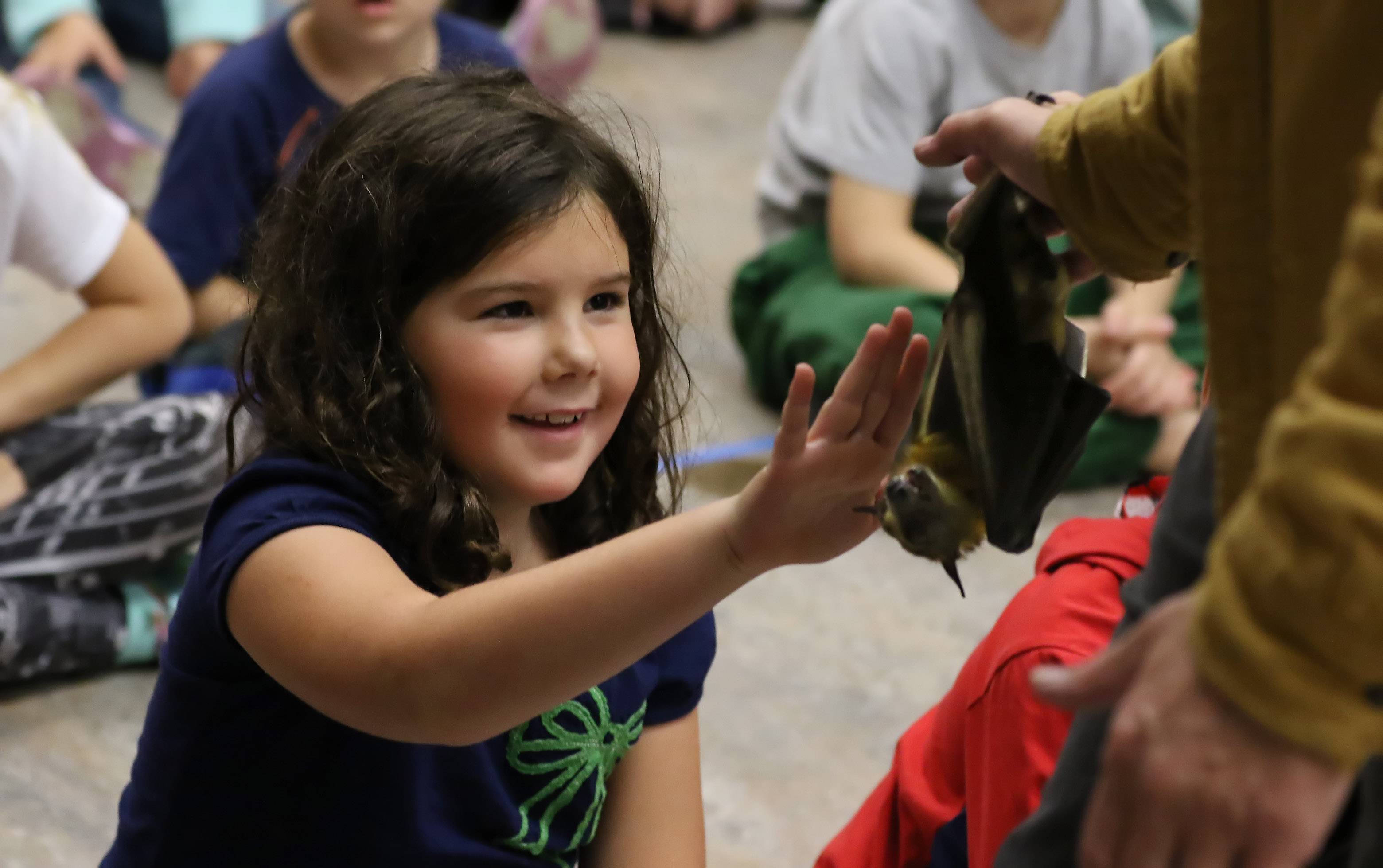 Abbi Jens, 6, reaches out to touch a fruit bat Sunday during the Mammals and More! program at the Grayslake Area Public Library. Scott Heinrichs and Christine Gomoll of the Flying Fox Conservation Fund brought out a bat, armadillo, opossum, python, parrot and other animals for children to touch.