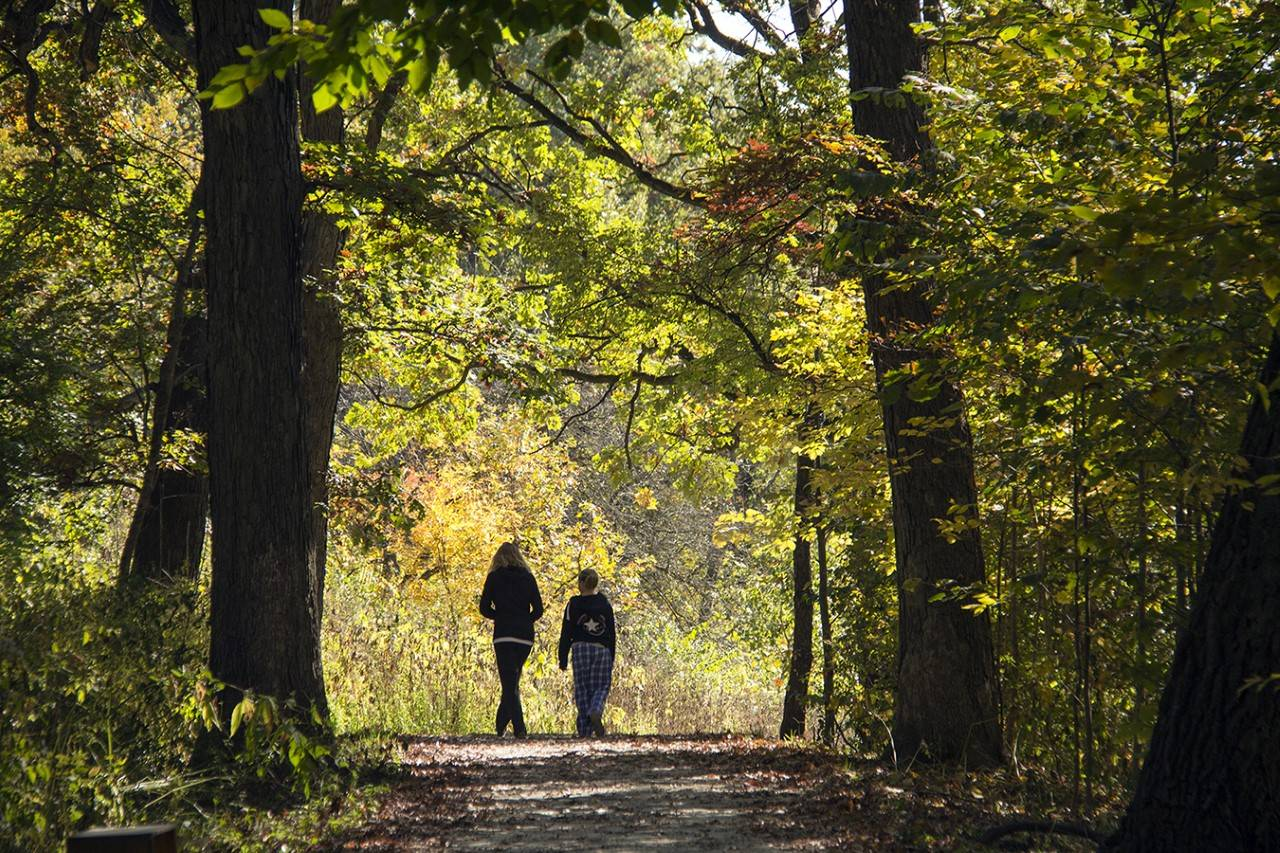 DuPage forest preserve officials plan to survey 10,000 residents to help set priorities for creation of a five-year master plan.