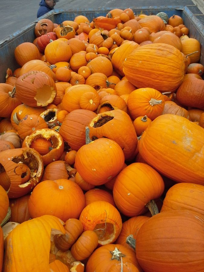 In 2014, Wheaton, Elmhurst and School & Community Assistance for Recycling and Composting Education (SCARCE) hosted the first pumpkin recycling collections in DuPage County.