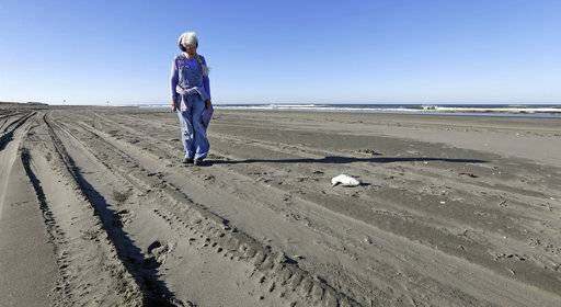 In this photo taken Sept. 28, 2017, Barbara Patton walks toward a dead bird she is about to examine as part of a citizen patrol surveying dead birds that wash ashore on beaches along the U.S. West Coast, in Ocean Shores, Wash. The multi-state monitoring program help tells a larger story about coastal environments, seabird deaths and health.
