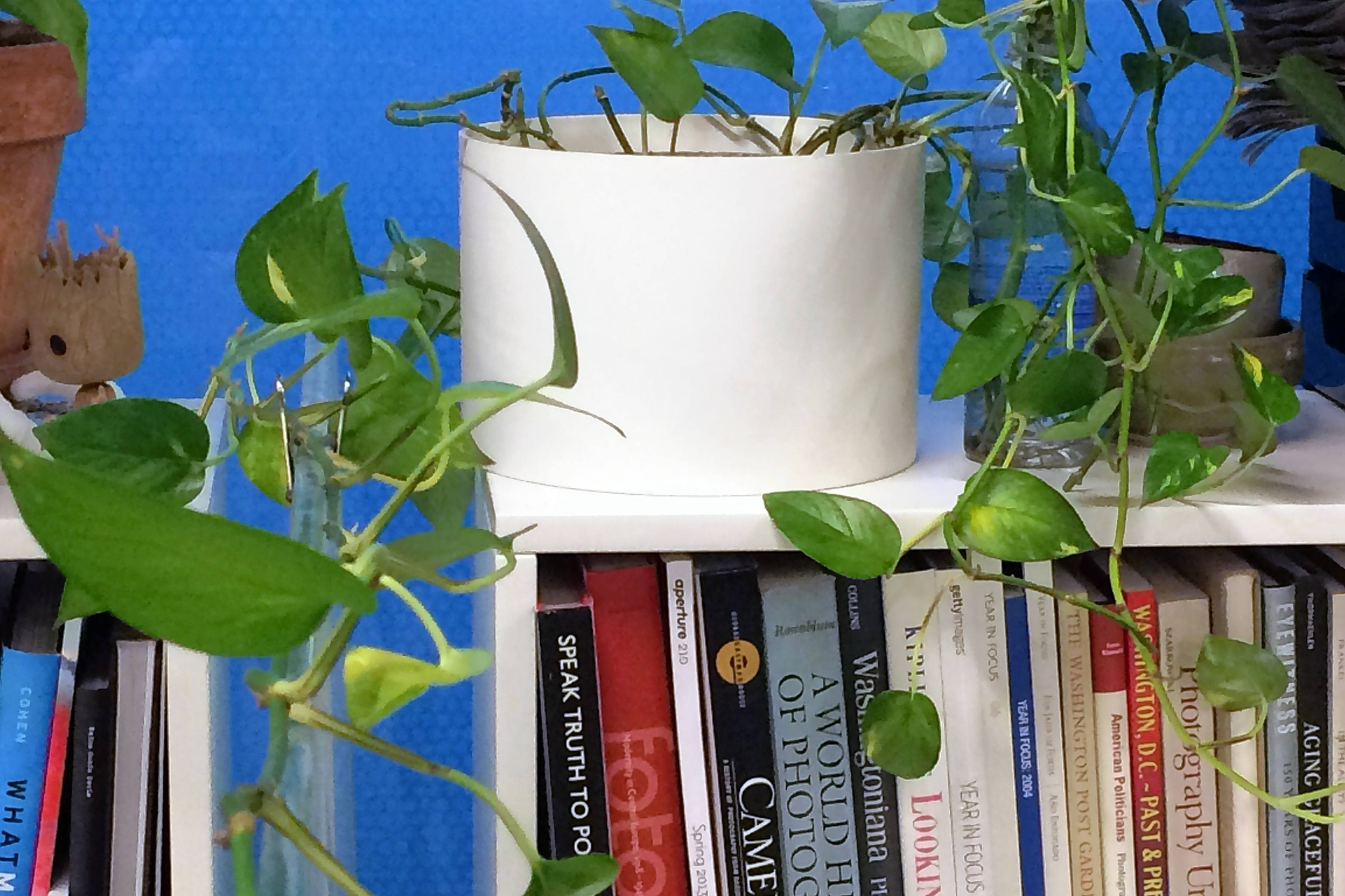 With its forgiving nature, the pothos vine is among a handful of ironclad houseplants that put up with the abuse of the dry and gloomy environment of the office cubicle.
