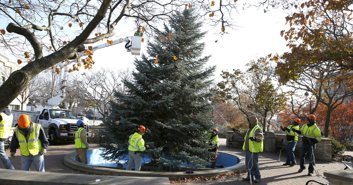 - Naperville Christmas Tree: Tall, Green And 17