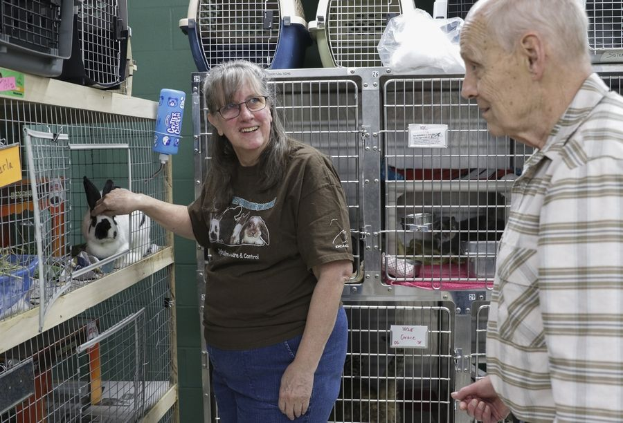 "Joan and David Irwin work to place rabbits in good homes. ""I enjoy seeing them become healthy, become socialized, and then go to a home where they're going to be a cherished and valued companion,"" Joan says."