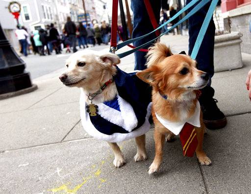 In this photo taken Nov. 25, 2017, rescue dogs named Molly Weasley and Arthur Weasley, owned by Diane and Jeff Swope, are dressed as Harry Potter movie characters on Spring Street during a Harry Potter-themed celebration called Diagon Alley in Newton, N.J. (Terry Klimek/The New Jersey Herald via AP)