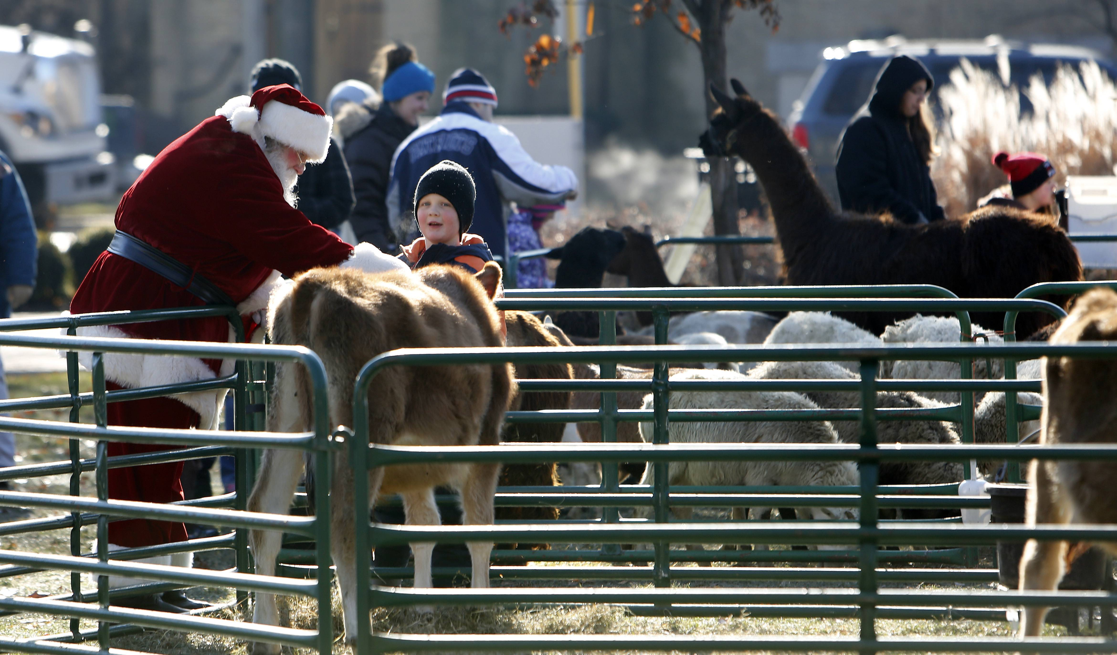 Santa takes a moment to greet some of the animals at the petting zoo during Dickens in Dundee at Grafelman Park in West Dundee.