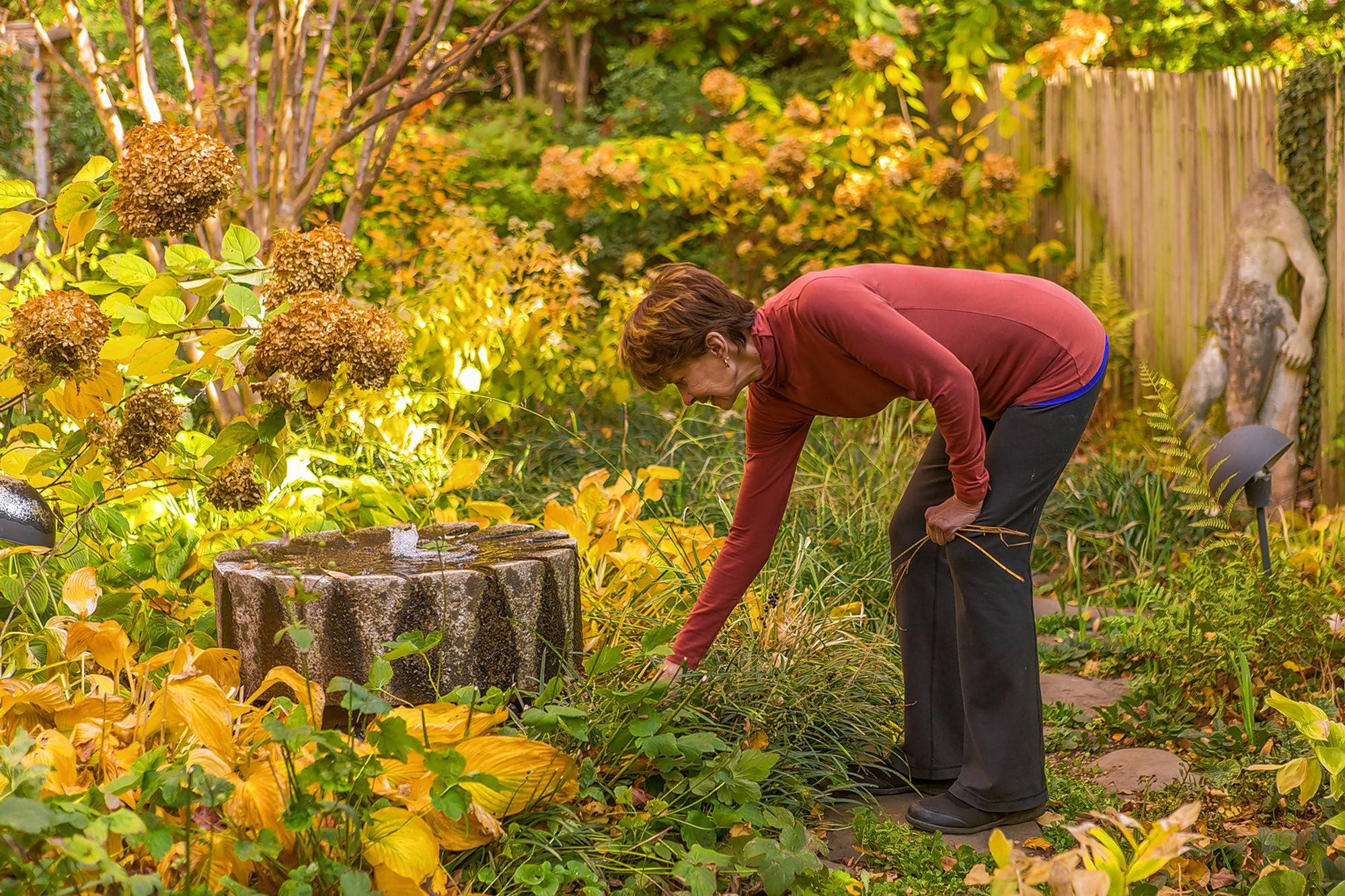 With a millstone-like fountain as its focal point, Barbara Downs' garden in the Georgetown neighborhood of Washington, D.C., is full of native and other plants, and plenty of fall color.