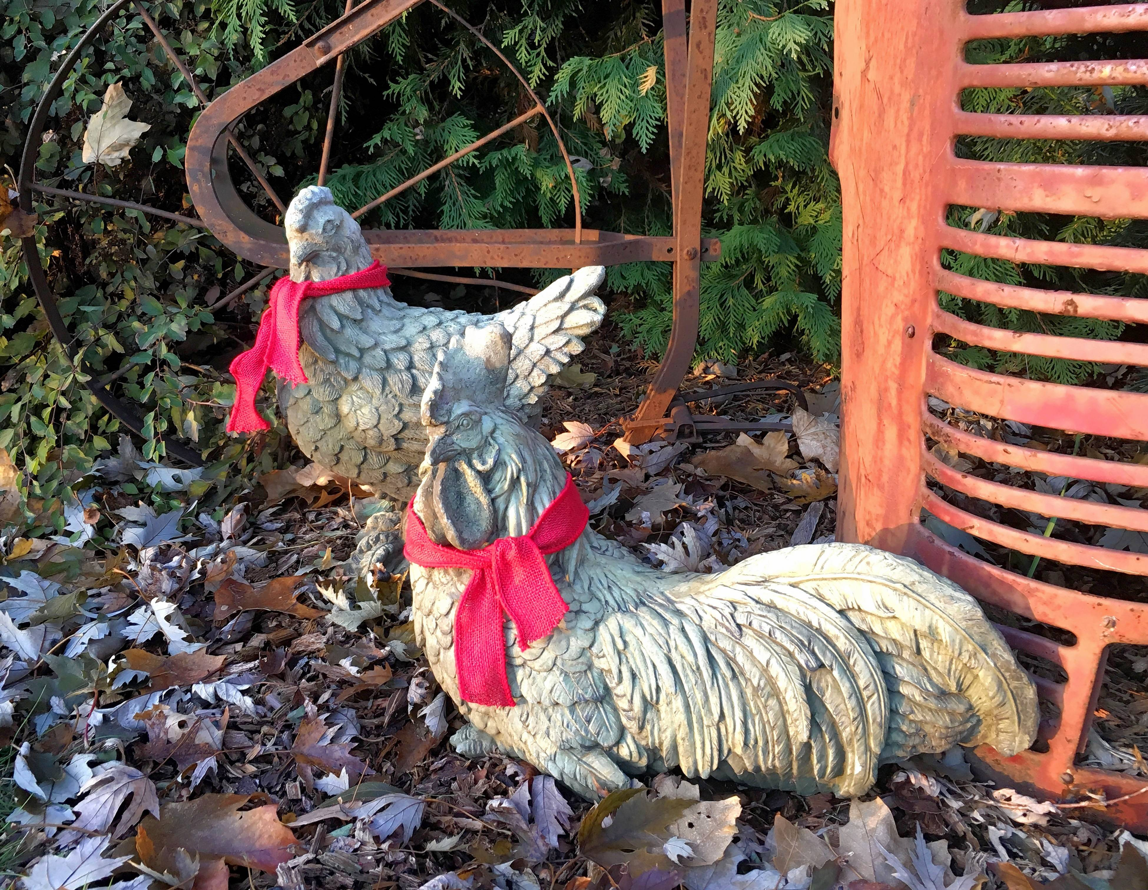Chickens in the author's garden get red ribbon scarves for the holidays.