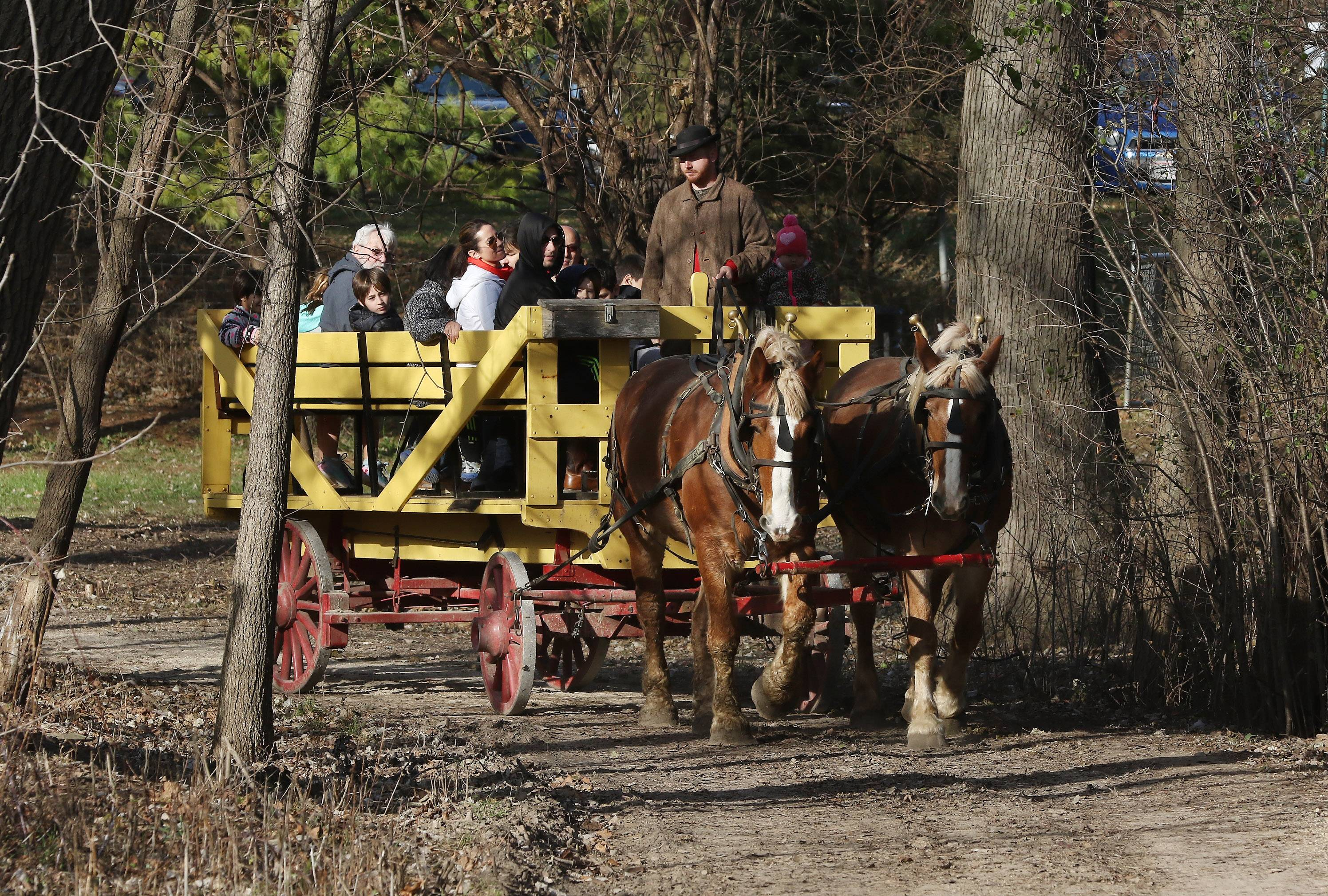 Museum educator Dan Hess drives the horse-drawn wagon as he gave rides Sunday during Christmas in the Valley at Spring Valley Nature Center in Schaumburg. The Schaumburg Park District gave visitors a chance to experience the holidays as they were celebrated in the late 1800s.
