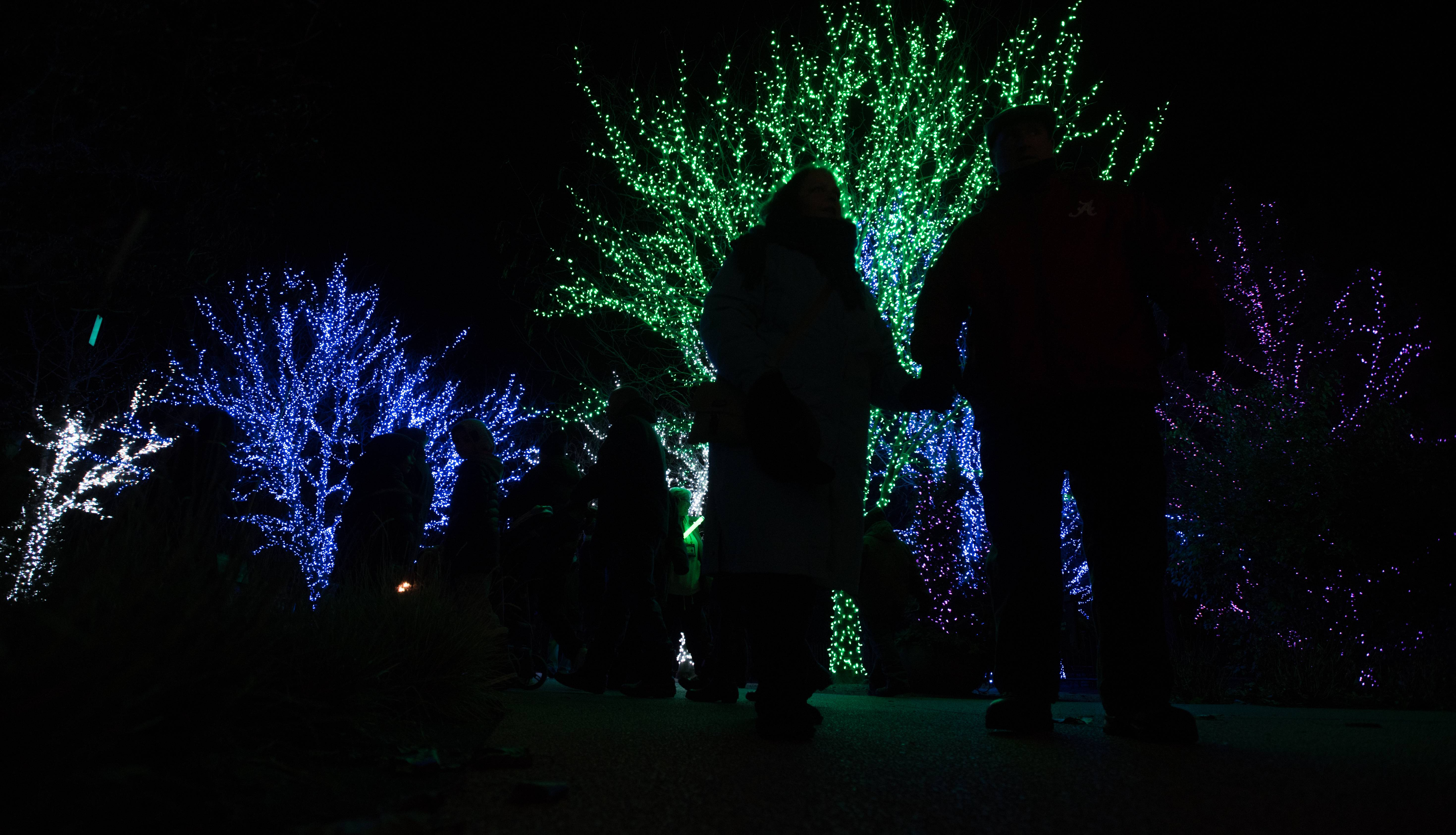 "Visitors to the Morton Arboretum's holiday lights display, ""Illuminations"" are silhouetted by the lights."