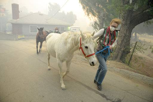 Horses are evacuated from a ranch along Kagel Canyon at the Creek fire, Tuesday, Dec. 5, 2017 in La Canada Flintridge, Calif. Raked by ferocious Santa Ana winds, explosive wildfires northwest of Los Angeles and in the city's foothills burned a psychiatric hospital and scores of other structures Tuesday and forced the evacuation of tens of thousands of people. (David Crane/Los Angeles Daily News via AP)