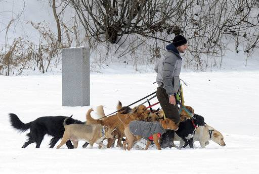 FILE - In this Thursday, Dec. 15, 2016, file photo, a dog walker controls multiple canines on a walk at Congress Park in Saratoga Springs, N.Y. Starting a business is often a pricey ordeal, but no- to low-cost ideas exist for aspiring entrepreneurs with unique and marketable talent. Americans shell out big bucks when it comes to their pets. If pets are your passion, you can start a dog-walking or pet-sitting business for little to no money. (AP Photo/Hans Pennink, File)