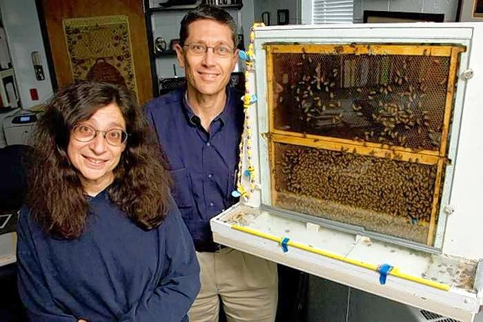 Working with bee hives is just part of the job for entomology professors May Berenbaum and Gene Robinson at the University of Illinois at Urbana-Champaign.