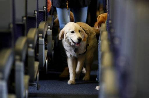 Good dog, bad dog ... Delta wants to know before you board