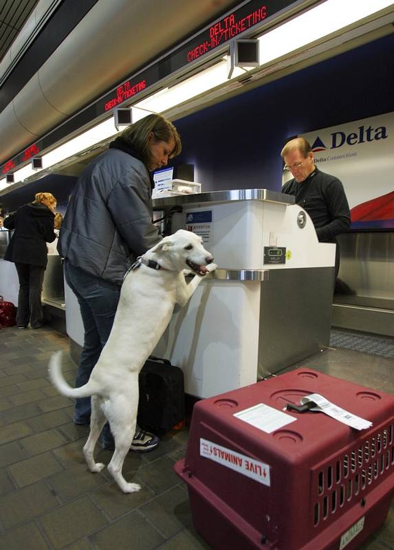United Airlines tightens emotional support animal policy