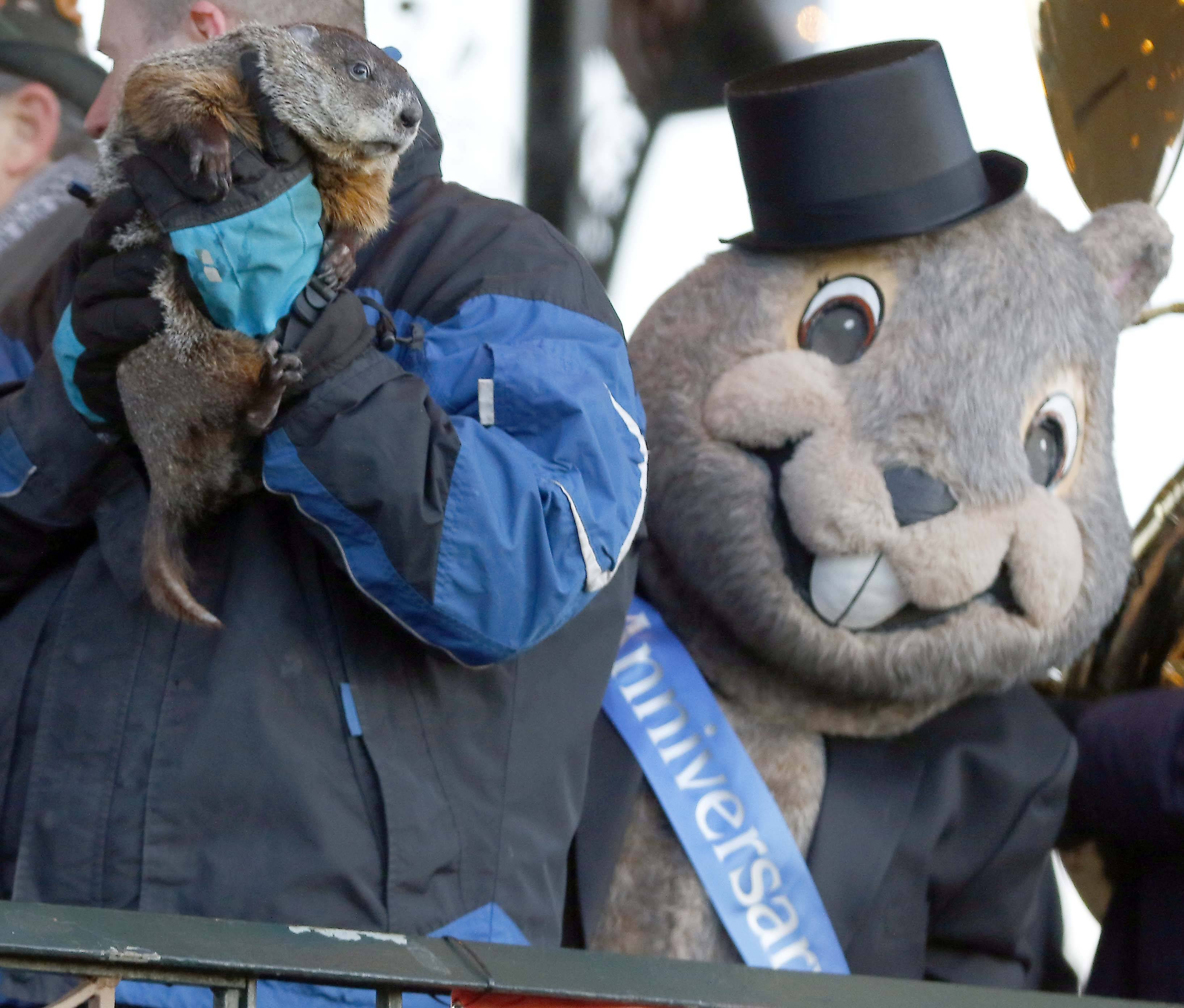 A giant groundhog mascot peeks around to see Woodstock Willie, who saw his shadow after emerging from his slumber Friday during the annual Groundhog Day event in Woodstock.