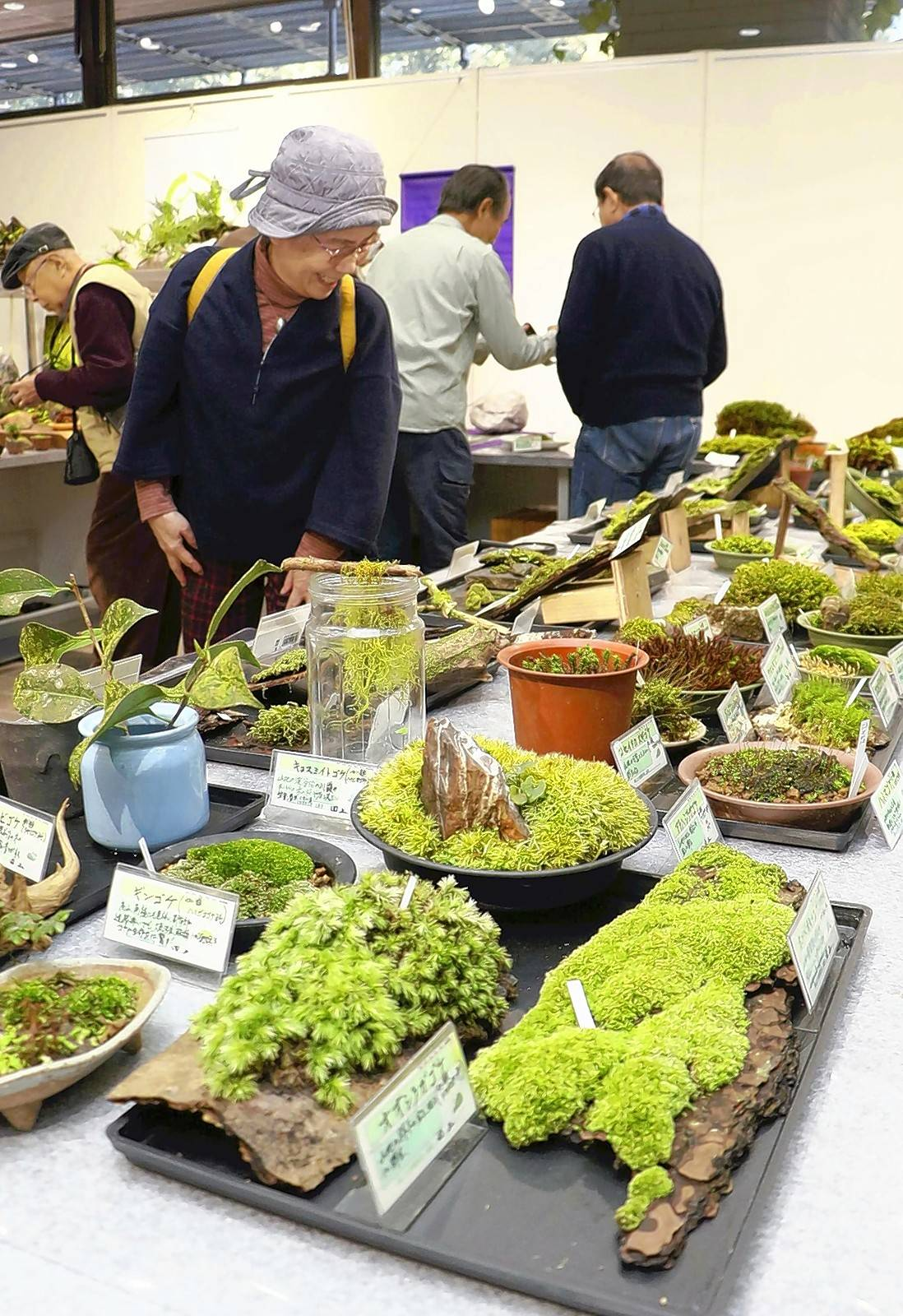 Visitors admire moss varieties at the Kyoto Botanical Gardens in Kyoto, Japan.