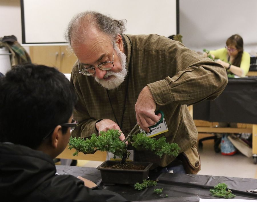 Horticulturist James Fairchild demonstrates how to trim a bonsai tree during the biennial Odyssey fine arts festival Wednesday at Stevenson High School in Lincolnshire.