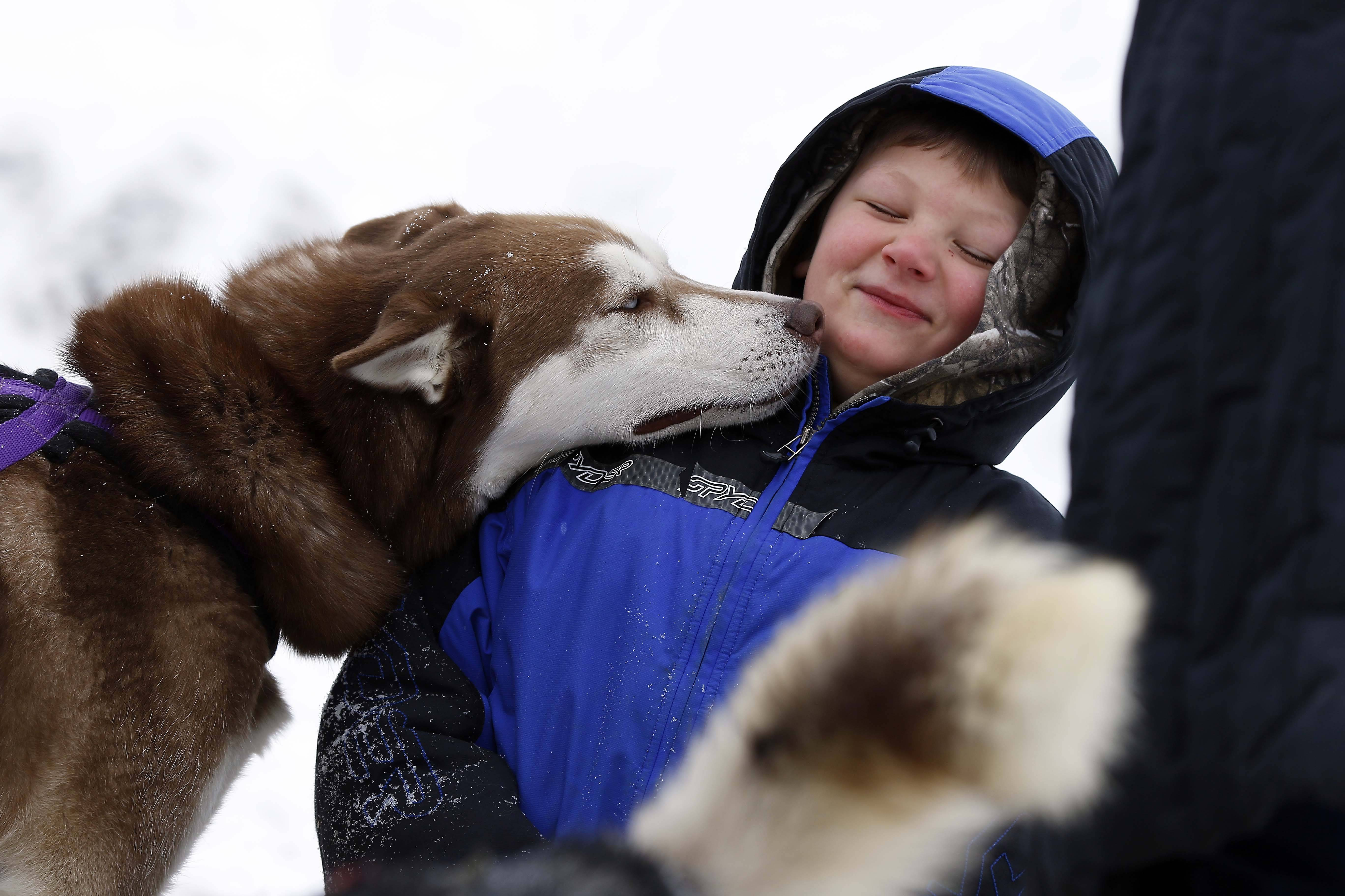 Six-year-old Alex Rottmann of Campton gets up close to a husky who on site to do demonstrations Saturday during the The Winter Wonders event at Campton Township Community Center.