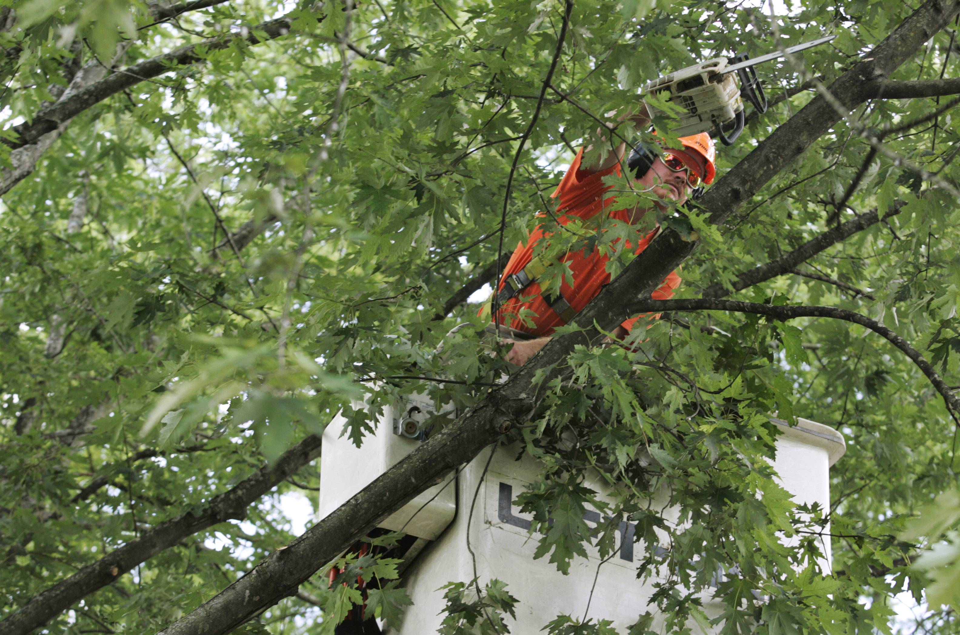 A Geneva worker trims branches high up in a silver maple tree along North Greenwich Lane several years ago. The city plans to count the trees on parkways, log what kinds of trees they are, and determine their health.