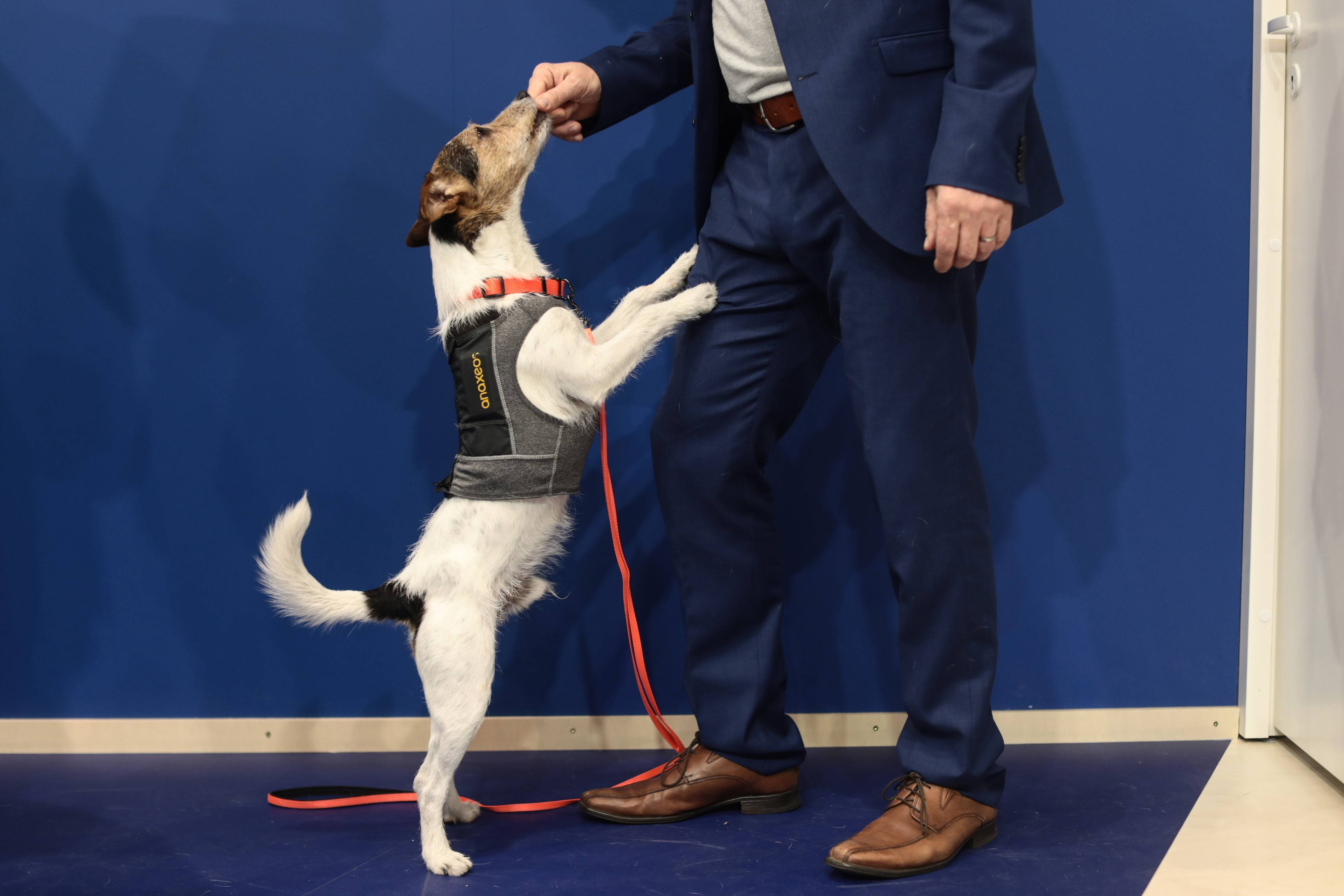 A dog wears a vest containing an anaxeos sensor at the Sense of Intelligence stand at the Mobile World Congress in Barcelona, Spain, on Feb. 27, 2018.