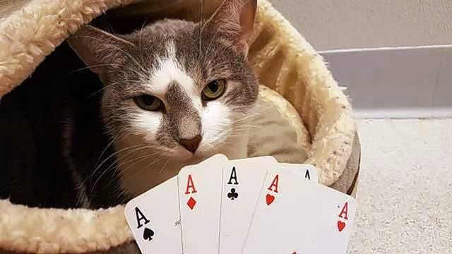 Delaware park blackjack tables