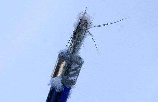Alaska city moose count relies on tips dna extracting darts for Alaska fish counts