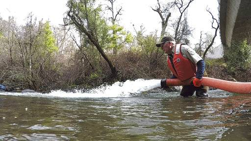 In this March 2, 2018 photo provided by the U.S. Fish and Wildlife Service, Brad Carter begins releasing approximately 29,000 endangered winter-run juvenile Chinook salmon into the North Fork of Battle Creek, a tributary of the Sacramento River near Manton, Calif. A $100 million project removing some dams and helping fish route around others is allowing wildlife officials to restore one of the state's most endangered native salmon to vital spring-fed Battle Creek, which springs from the cold northernmost reaches of the Sierra Nevada. Authorities say Battle Creek could prove a species-saving chill hideout against climate change and drought. (Laura Mahoney/U.S. Fish and Wildlife Service via AP)
