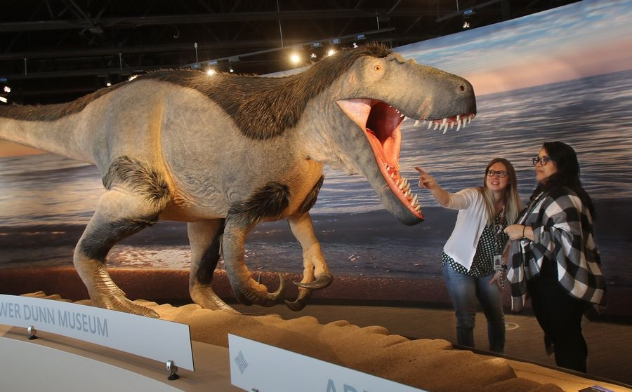 Lake County Forest Preserve employees Jordan Wagner, left, and Millie Olvere look at the Dryptosaurus at the new Bess Bower Dunn Museum that will open to the public in Libertyville on Saturday. The museum is named after the county's first official historian.