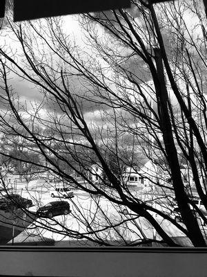William Dolney, un élève de sixième, a pris une photo en noir et blanc d'un arbre devant une fenêtre de la South Middle School à Arlington Heights.