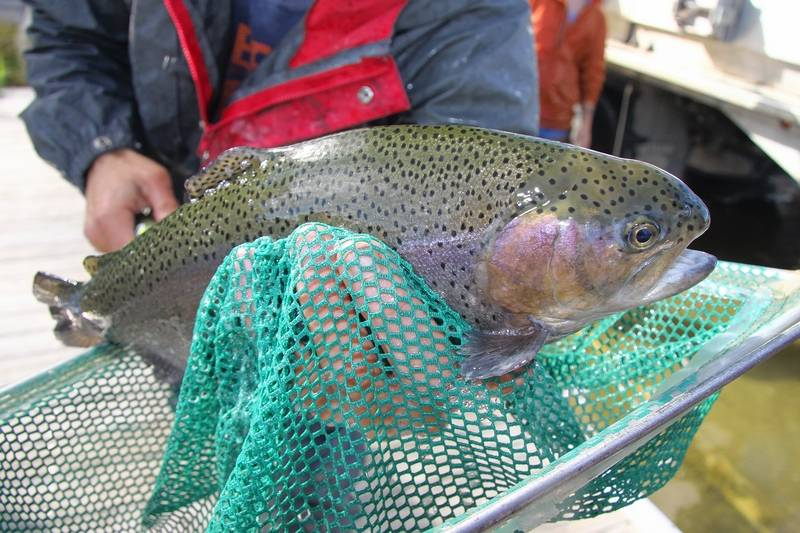 Dupage prepares for start of trout fishing for Trout fishing illinois