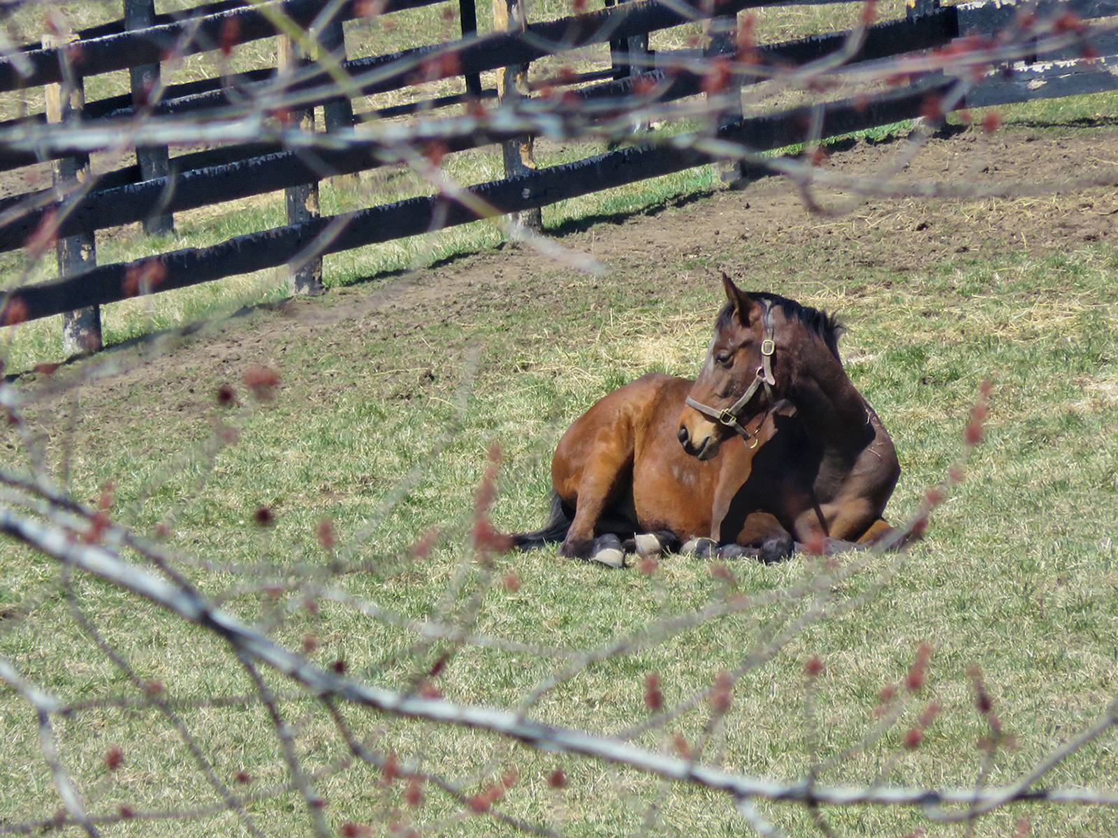 I have noticed lately some of the horses boarded near me are laying down some of the time. I caught this one laying down today on this cold April day. When we get an occasional warm day this spring the horses are running around. I can sympathize. When is Spring going to come?